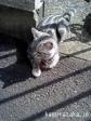 【mugimaru2】お店の猫っぽい